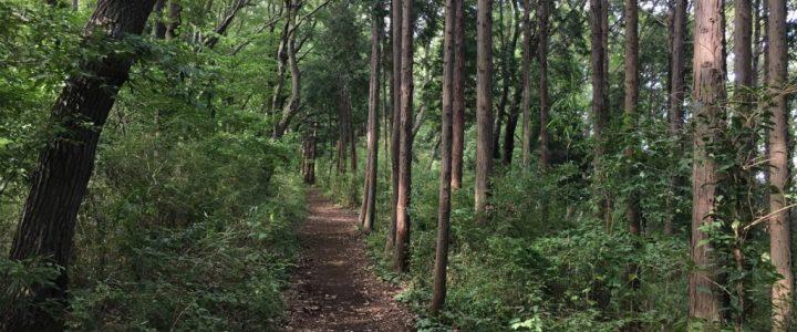 Hiking Kōbōyama (Part 2)