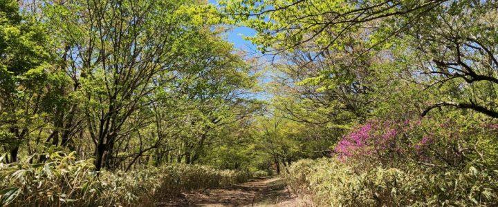Hiking Marudake From Otome-Toge (Hakone)