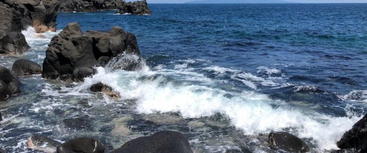 Hiking the Jogasaki Coast: Nature Study Course (Part 1 of 2)