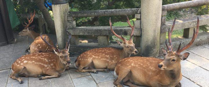 The Deer of Nara Park